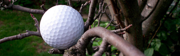 Golf Tips for Beginners: Working Around Trees